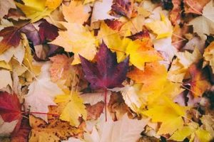 Read more about the article How to Make Crafts with Autumn Leaves