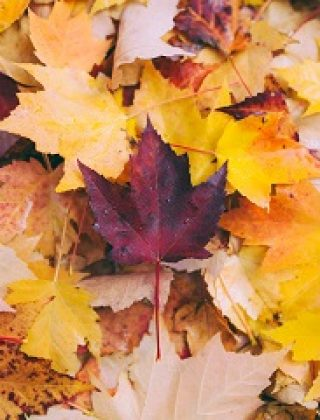 How to Make Crafts with Autumn Leaves