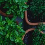 How to Grow Herbs From Scratch with Your Kids