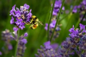 Confronting fear of bees