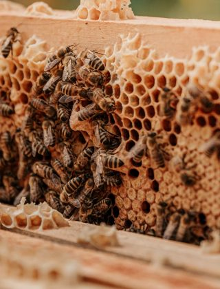 Ways To Decrease Fear Of Bees And Wasps in Children
